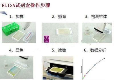 脂肪酸检测试剂盒