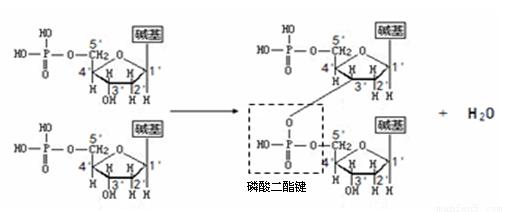 2×Taq PCR Colorless Mix 1ml/1mlX5支