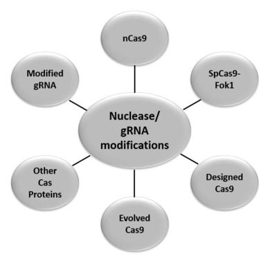 Set of 3 SMARTvector 2.0 hCMV-TurboRFP Human Lentiviral shRNA Particles