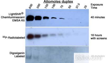 POL II MIR-UHMK1 RNA1 DUOPAK