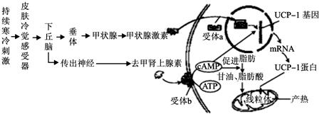 Anti-MAFG抗体