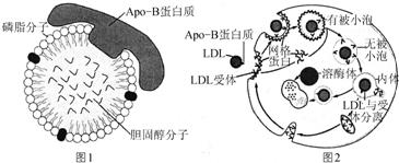 Anti-CREB3L1抗体