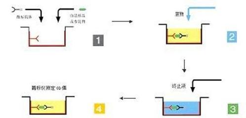 Anti-LRRC14抗体