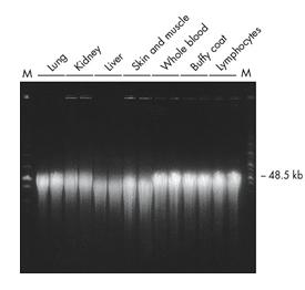 MagRNA磁珠细菌RNA提取试剂盒