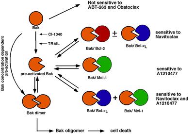 CCK-8细胞增殖及毒性检测试剂盒