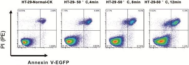 TUNEL细胞凋亡检测试剂盒(Alexa Fluor 647)