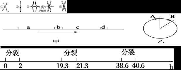 噻唑兰;MTT; 0793;298-93-1