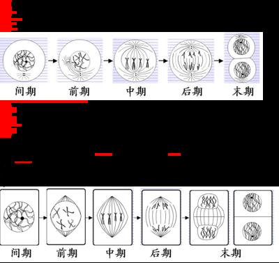 计算机辅助一次性精子计数板