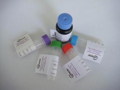 E. coli DH5a lpir