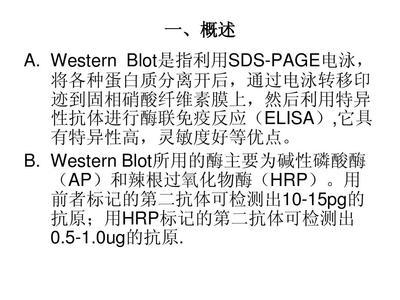 细胞及组织总蛋白抽提试剂盒
