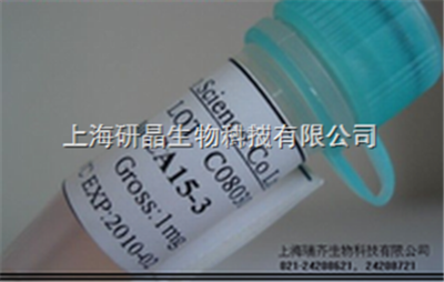 抗人HER-2单克隆抗体