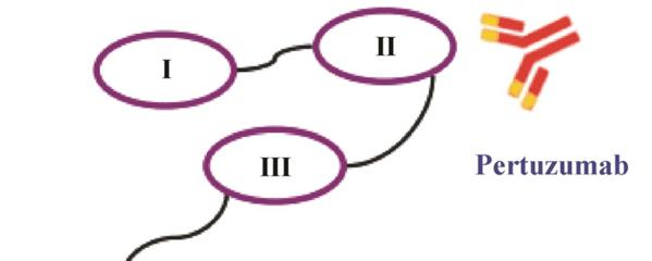 Anti-ARP1B/PC3抗体
