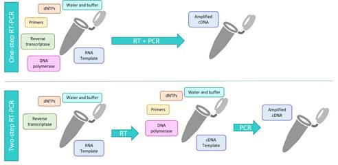 转基因植物cry1A基因核酸检测试剂盒(PCR-荧光探针法)