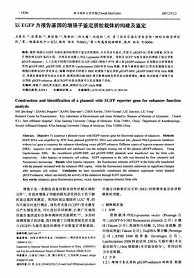 TCF/LEF1 luciferase reporter plasmid 荧光素酶报告基因(报告基因质粒)