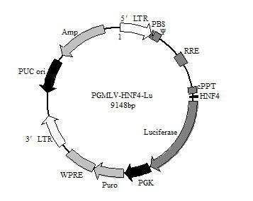 报告基因质粒阴性对照