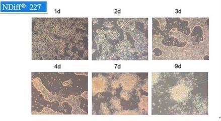 人体胚胎干细胞完全培养基