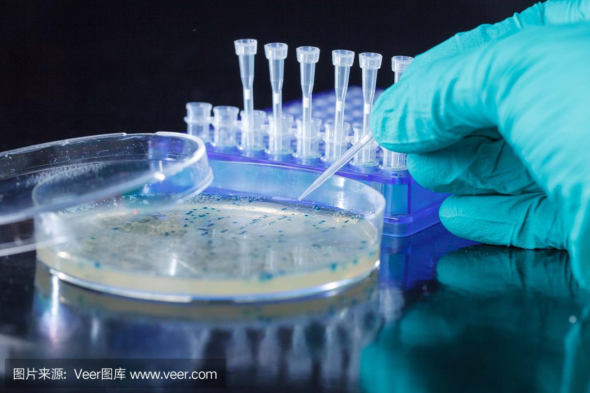 pCITE-4b(+) DNA