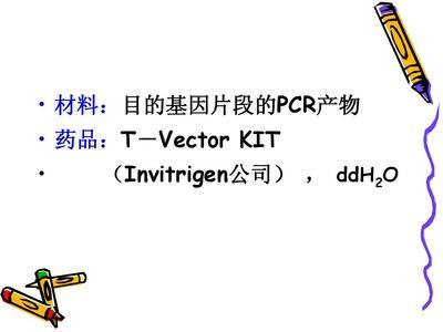 pCDNA3.1-Flag-DHX36