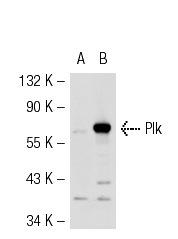 KT109   多重PCR扩增试剂盒  50次(250U)