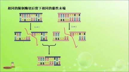 Taq DNA连接酶(Taq DNA Ligase)