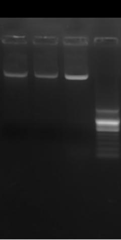 琼脂糖凝胶6B/Sepharose 6B