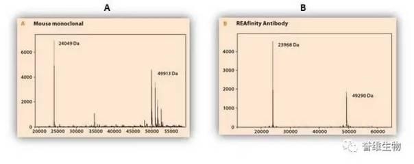 Anti-MRPL22抗体