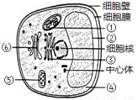 a-葡萄糖苷酶;9001-42-7