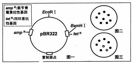 pET-28a(+)