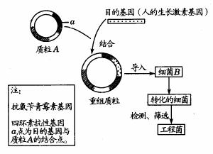 pCold III载体 原核表达载体系统