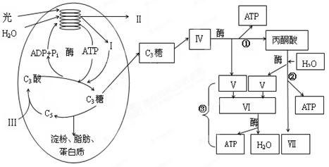 pET25b(+)载体 原核表达载体系统