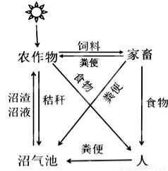 BL21(AI)菌株 原核表达载体系统