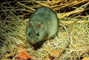 大鼠纤维蛋白原降解产物(rat FDP)