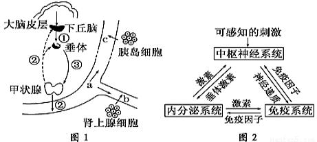 若丹明-透明质酸酯-荧光素