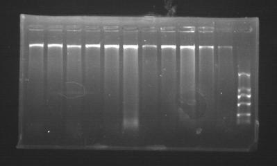 通用基因组DNA提取试剂盒