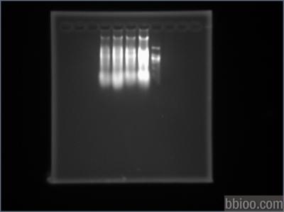 快捷型植物基因组DNA提取试剂盒-I