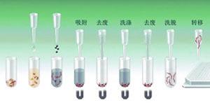 RNA病毒基因组提取试剂盒