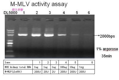 第二代耐热逆转录酶