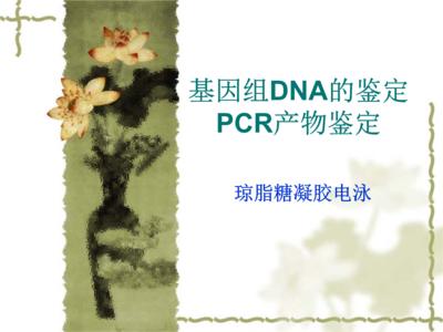 【正品直销,售后保障】(可构建适用于Ion Torrent平台的多样品靶向测序DNA文库)VAHTS AmpSeq Adapters 1-12 for Ion Torrent