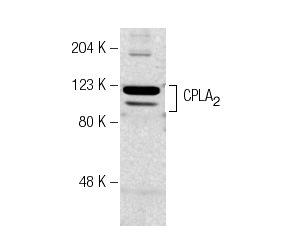 异硫青酸胍;0380;593-84-0
