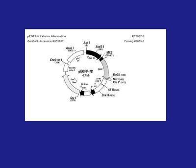 Biotech Support Group NuGELTM  Phenyl Boronic Acid NuGELTM  Phenyl Boronic Acid(NPBA-05)