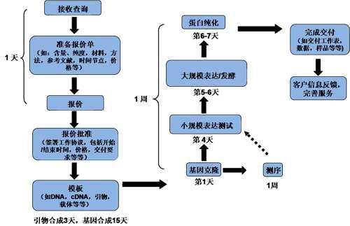m-Conotoxin GIIIA多肽合成