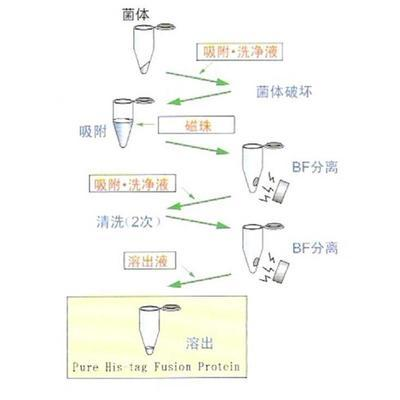 谷胱甘肽高速纯化树脂
