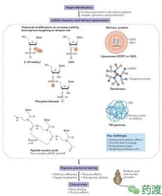 人脐静脉内皮细胞MicroRNA