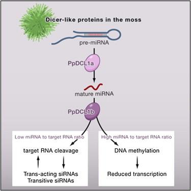 人肝细胞MicroRNA