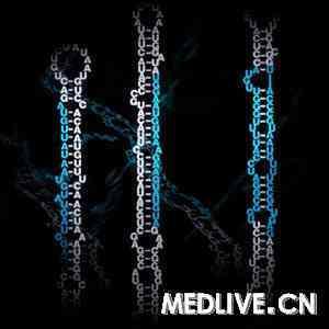 人肾小球系膜细胞MicroRNA