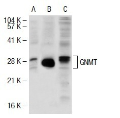 Recombinant HDAC5 catalytic domain, active