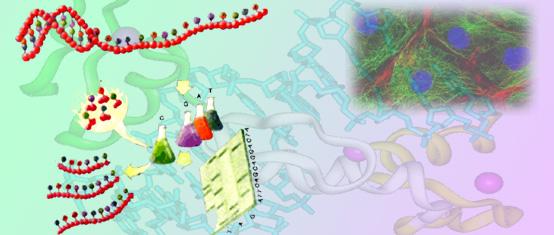 登革热病毒Ⅰ、Ⅱ型分型PCR检测试剂盒