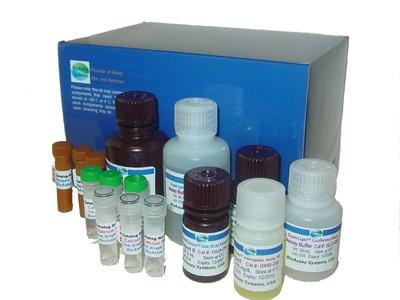 【正品直销,售后保障】兼容去污剂蛋白定量试剂盒