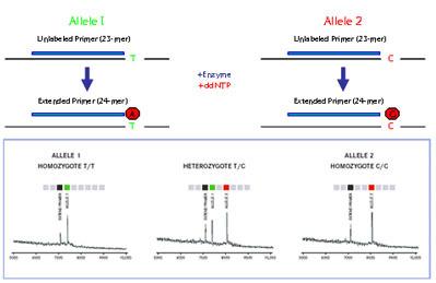 MicroRNA研究策略