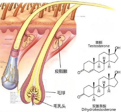 Transdermal Hormone Delivery Peptide, TD-1